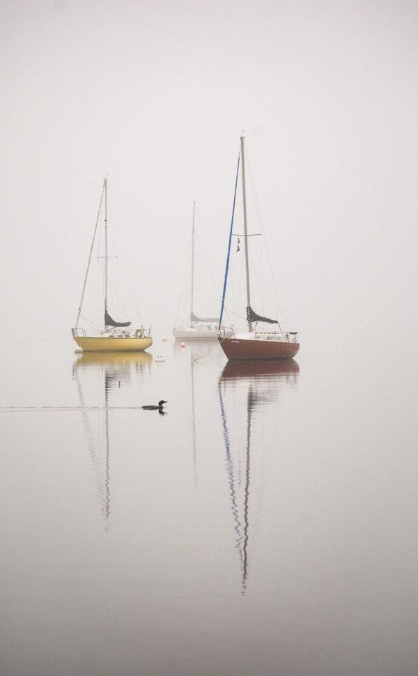 three anchored sailboats reflect on calm water as Loon paddles past