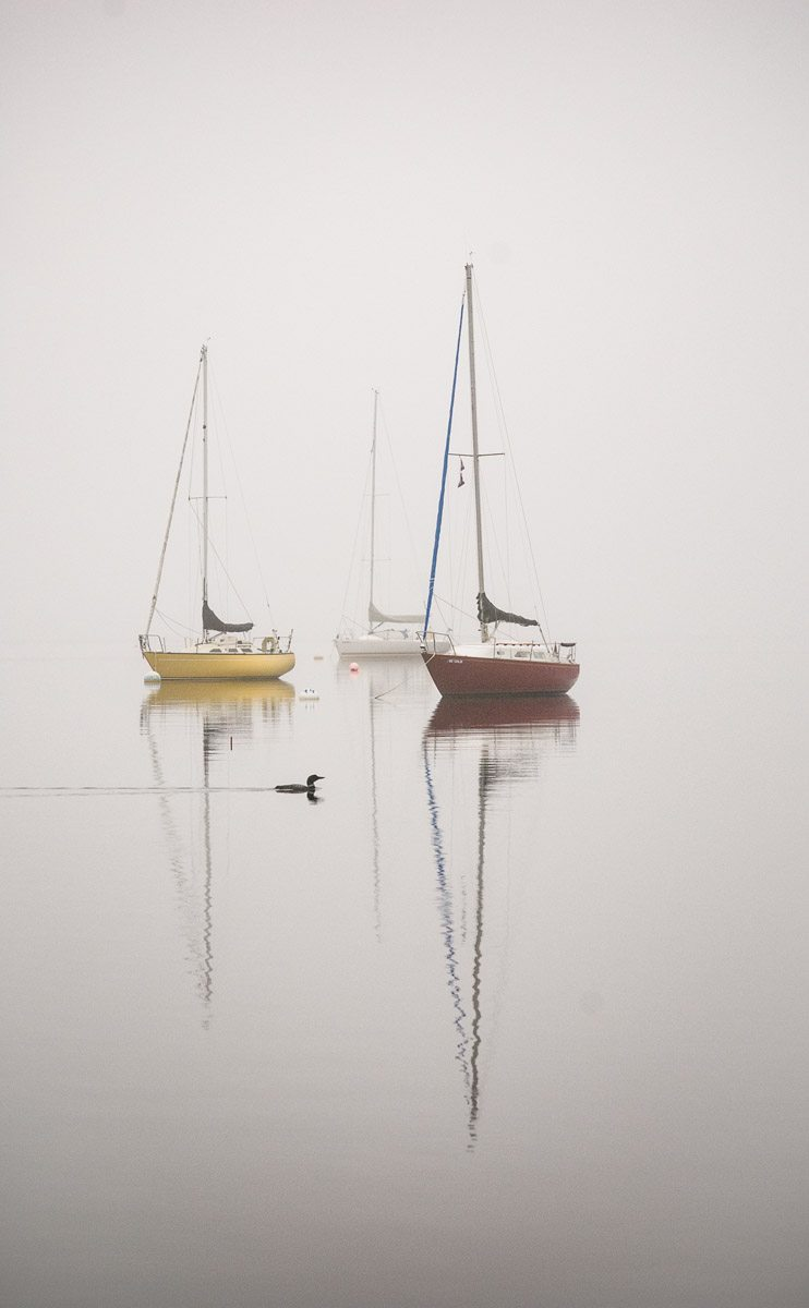 three anchored sailboats reflect on calm water as Loon paddles past