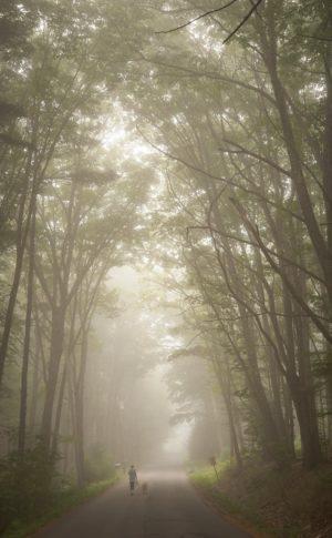 Woman walks dog under arching trees, foggy morning