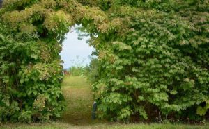 Arched opening in a tall green hedge gives a glimpse of a garden and the bay beyond