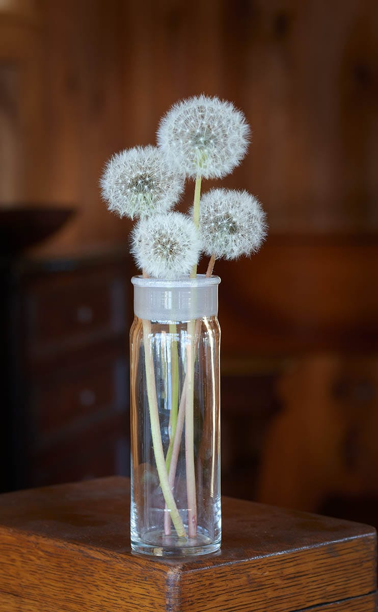 four puffy dandelions arranged in a glass apothecary jar